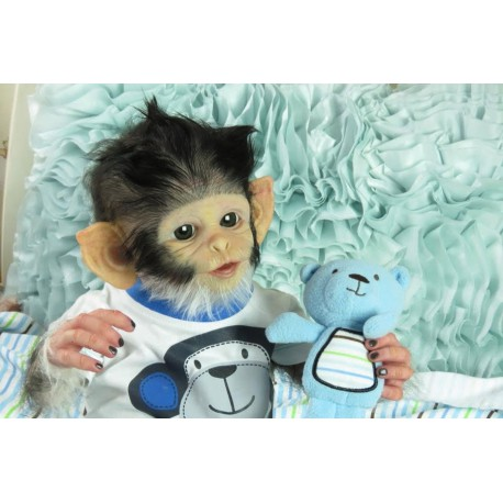 Cheeky Monkey - Phil Donnelly